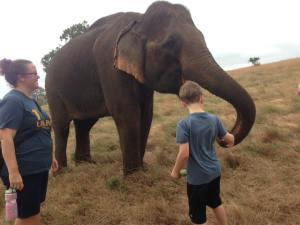 Feeding the elephants at the Elephant Sanctuary in Mondulkiri