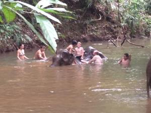 "John and Luke were able to ""swim"" with the elephants :)"